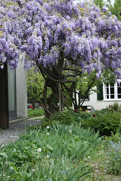 FLM_printemps_2008